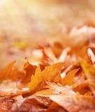 在地面上的干燥叶子 免版税库存照片
