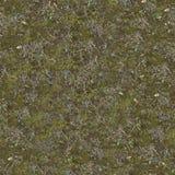 在地面上的干燥和绿草与青苔 免版税库存图片
