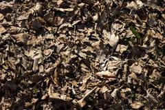 在地面上的干燥黄色叶子 库存照片