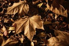 在地面上的干秋叶 库存照片