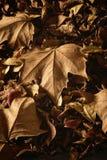 在地面上的干秋叶 库存图片