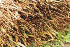在地面上的播种的分支森林 图库摄影