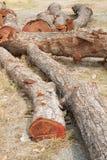 在地面上的木材 库存图片