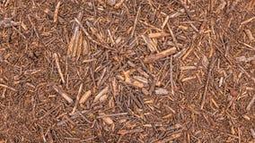 在地面上的杉木锥体 免版税图库摄影