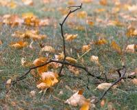 在地面上的枝杈 库存照片