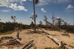 在地面上的树群 库存照片