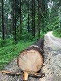 在地面上的树 免版税库存图片