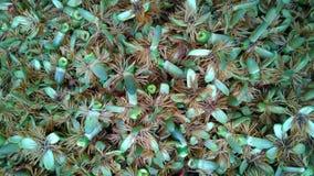 在地面上的棕榈花 图库摄影