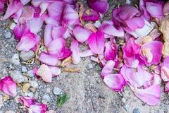 在地面上的狂放的玫瑰花瓣 免版税库存照片