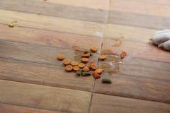 在地面上的狗食 免版税库存照片