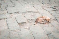 在地面上的狗 免版税库存照片