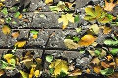 在地面上的秋叶在花格 库存照片