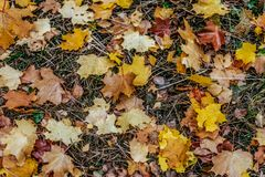 在地面上的秋叶,各种各样的花,在秋天下午黄绿色褐色植物中 库存照片