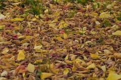 在地面上的秋叶 免版税图库摄影