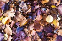 在地面上的秋天叶子在12月 免版税图库摄影