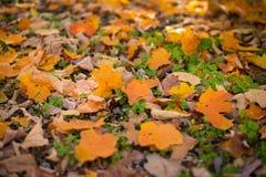在地面上的秋天叶子 免版税库存图片