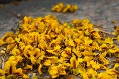 在地面上的秋天黄色花 图库摄影