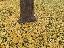 在地面上的秋季叶子在12月 免版税库存照片