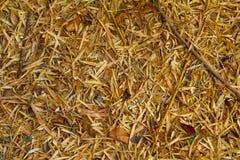 在地面上的竹叶子秋天 免版税图库摄影