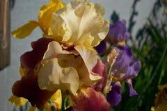 在地面上的紫色花 免版税库存图片