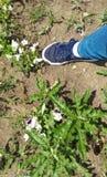 在地面上的脚与蝴蝶花和蒲公英叶子 免版税库存照片