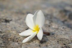 在地面上的花下落 库存图片