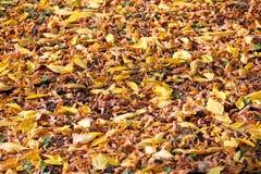 在地面上的落的叶子 免版税图库摄影