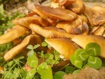 在地面上的蘑菇大植物 免版税库存照片