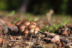 在地面上的蘑菇 免版税库存图片