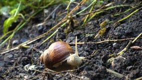 滑在地面上的蜗牛在公园增加了录影速度 股票视频