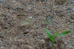 在地面上的蝴蝶 免版税图库摄影