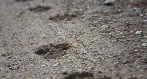 在地面上的足迹狗 免版税图库摄影