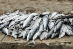 在地面上的鱼 免版税库存照片