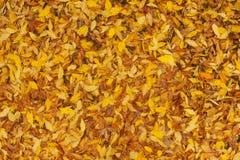 在地面上的黄色叶子,背景 免版税库存图片