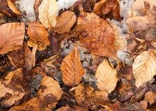 在地面上的冻叶子 库存图片