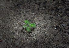 在地面上的年幼植物 免版税图库摄影