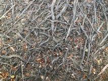 在地面上的结构树根 图库摄影