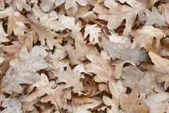 在地面上的冻秋叶 背景蓝色云彩调遣草绿色本质天空空白小束 温暖的口气 免版税图库摄影