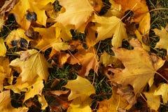 在地面上的黄色叶子 免版税库存照片