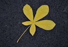 在地面上的黄色叶子 免版税库存图片