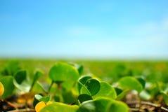 在地面上的绿色植物与在天空的光滑的蓝色颜色 抽象背景 图库摄影