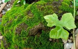 在地面上的绿色 库存图片