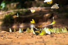 在地面上的蝴蝶小组 免版税库存图片
