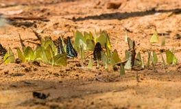 在地面上的蝴蝶小组 库存照片