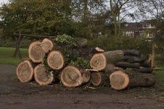 在地面上砍和堆积的老树 库存照片