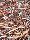 在地面上驱散的澳大利亚吠声 库存照片