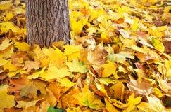 在地面和树干的秋天五颜六色的叶子 免版税图库摄影