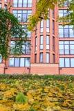 在地面和现代大厦的下落的叶子在backgroun 免版税库存图片