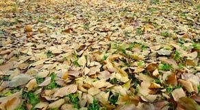 在地面图象照片下落的叶子 免版税库存照片