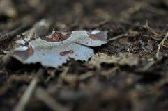 在地面在热带庭院里,绿色叶子纹理,叶子上的野生蝴蝶在热带森林里 库存图片